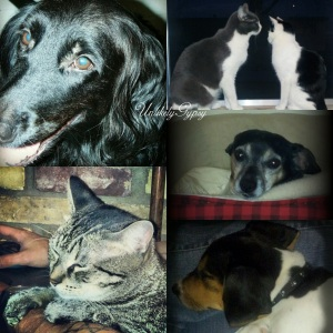 Our dogs and cats <3